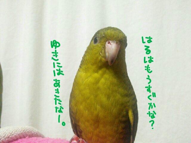 2015012617165114b.jpg