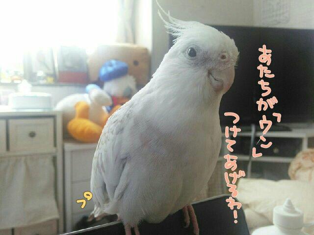 PicsPlay_1432347999881.jpg