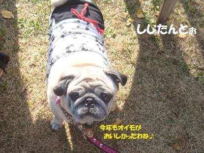 2014朝霧