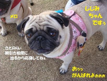 DSC00562_20150305212036dbd.jpg