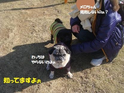 DSC02111_2015011622543006d.jpg