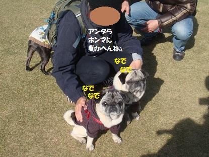 DSC02176_20150116234941dff.jpg