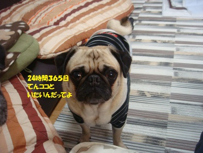DSC02746_20150114210824628.jpg