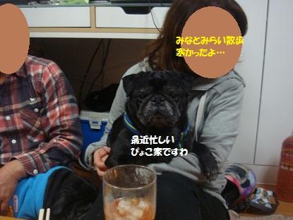 DSC02979_20150122183617c0a.jpg