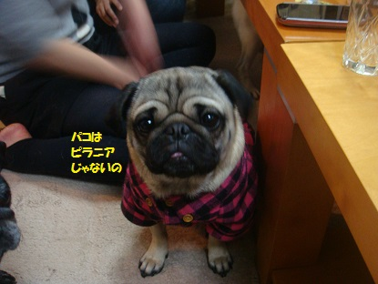 DSC03061_201501230034343d4.jpg