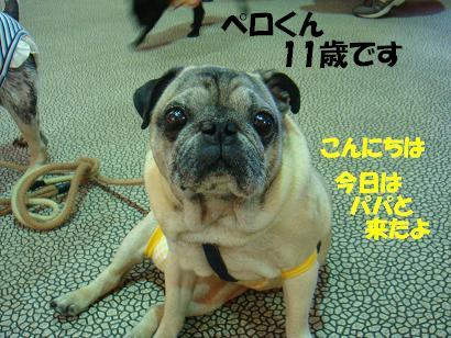 DSC03209_20150425142727a80.jpg