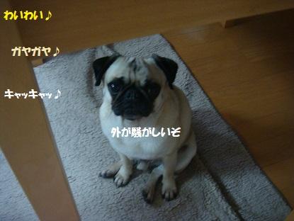 DSC03618_2015040804014465e.jpg
