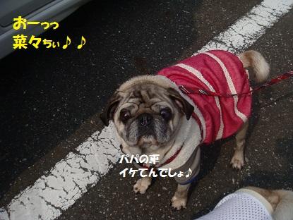 DSC03877_2015040416320354e.jpg