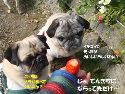 DSC03898_20150404211927bc7.jpg