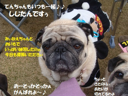 DSC04055_201503052129326dd.jpg