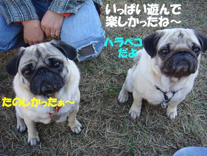 DSC04136_201505212352103da.jpg