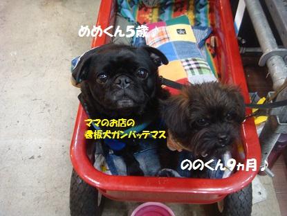 DSC04367_20150406043410416.jpg