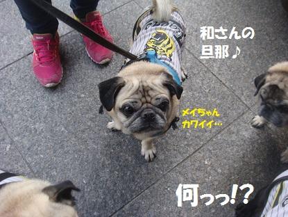 DSC04874_201504251433183cd.jpg