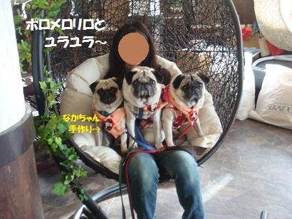 DSC06362_20120512160424_201505231623206b5.jpg