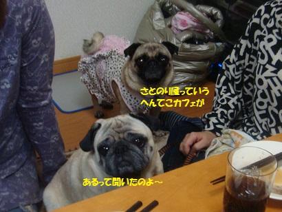 DSC07188_20121106033625_20150305222838a76.jpg