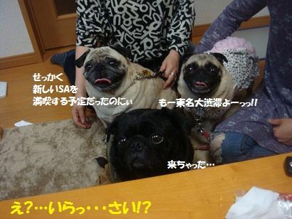 DSC07390_201503052228377ff.jpg