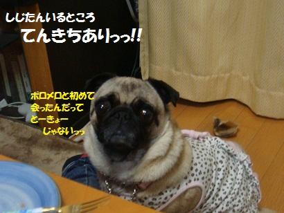 DSC07442_20121105201534_201503052225370ea.jpg