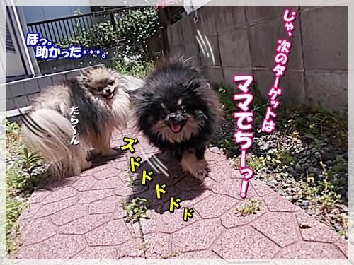DSCN8806_20150513121410d0b.jpg