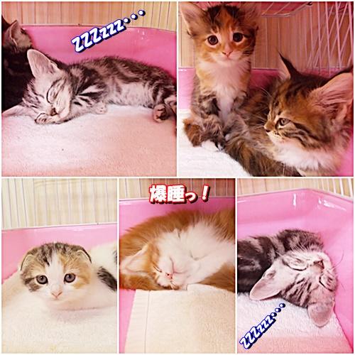 catss_2015031823332134f.jpg