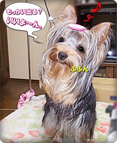 chi-san.jpg