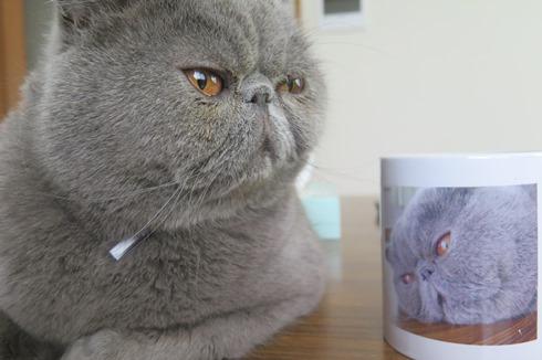 2)マルタんカップと