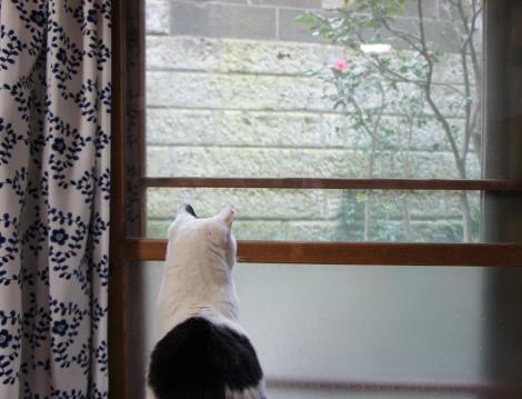 ぷー外を見る