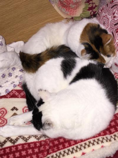猫団子2015年2月