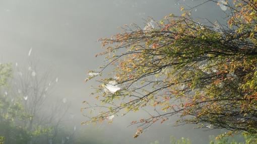 9471霧が谷158910