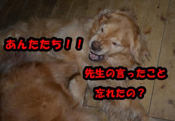 DSC_3195_20150419232923a12.jpg