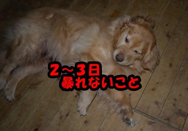 DSC_3198_20150419232922063.jpg