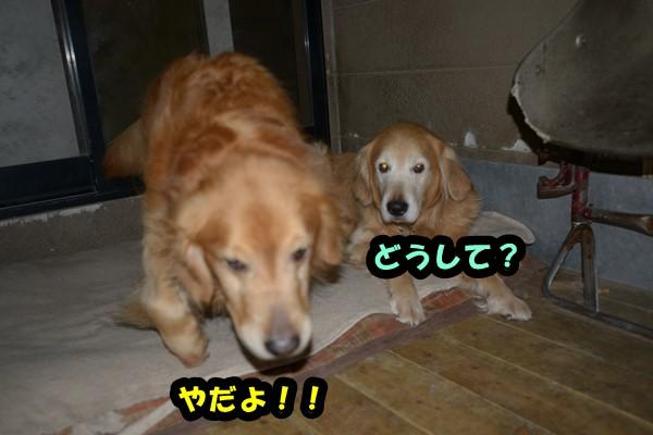 DSC_3217.jpg