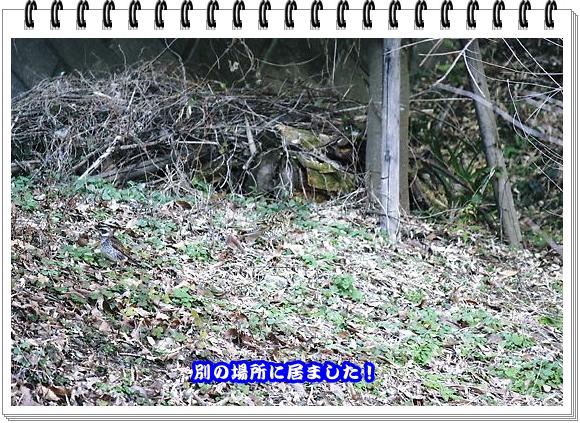 2152ブログNo5