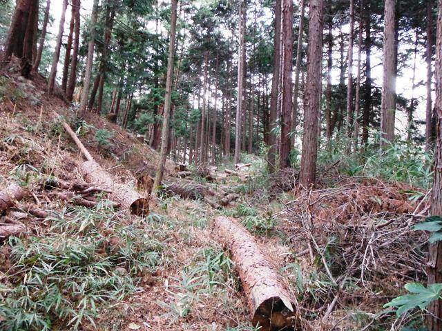能見城2黒駒砦・堂坂砦 (41)