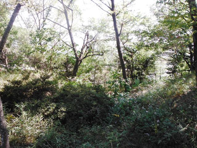 若神子城(北杜市) (33)