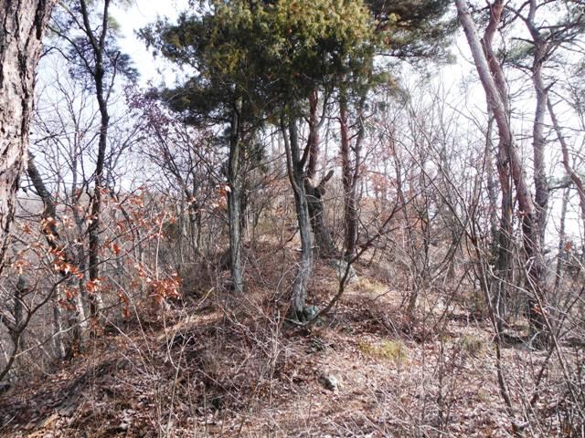 物見城(村上連珠砦群) (5)