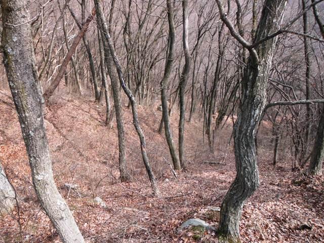 ケムリの城(村上連珠砦群) (17)