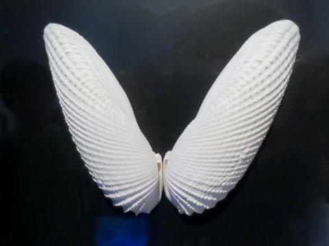 02IMG_6704天使の翼 (480x359)