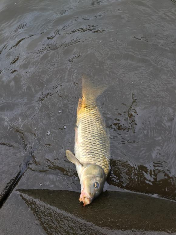 鯉釣り、カープフィッシング 夫婦でぶらぶら釣り紀行