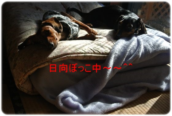DSC_7755.jpg