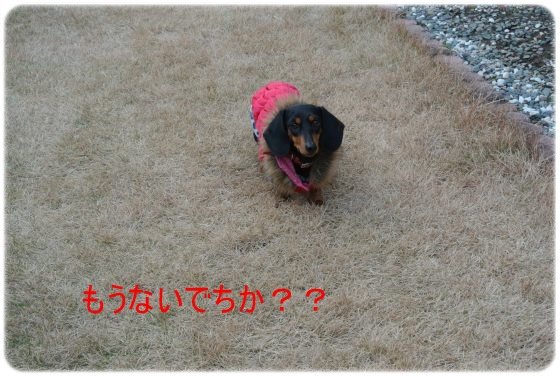 DSC_7803.jpg