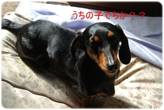 DSC_7945.jpg
