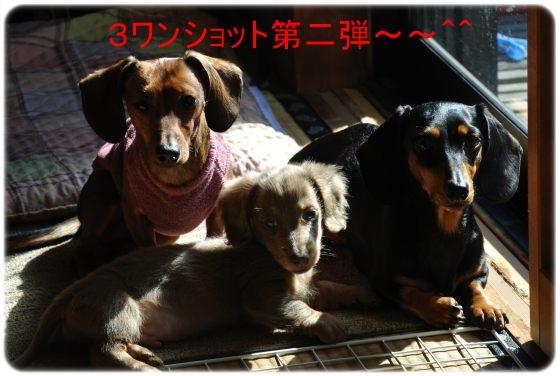 DSC_8540.jpg