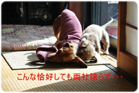 DSC_8602.jpg
