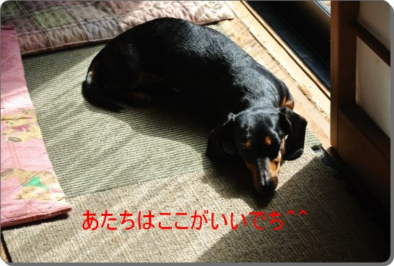 DSC_8748.jpg