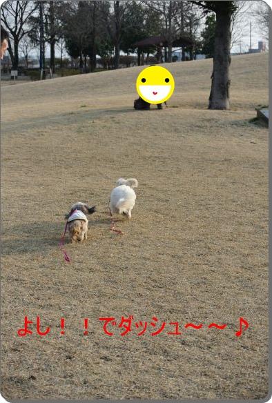 DSC_8977.jpg