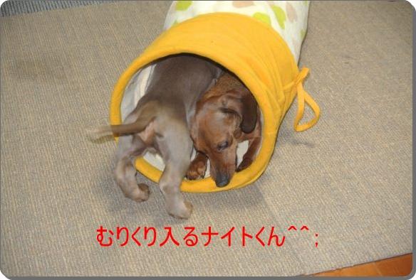 DSC_9018.jpg