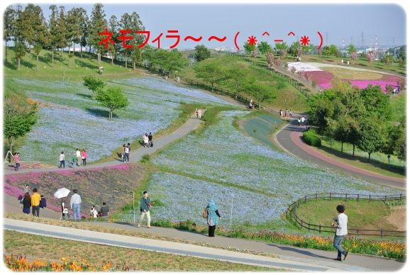 DSC_9873.jpg