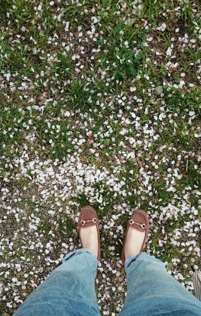 足元に花びら