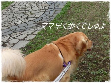 4月2日桜4