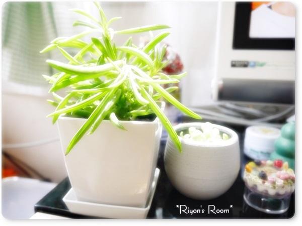食虫植物③